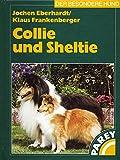 Collie und Sheltie