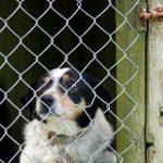 Collies im Tierheim: Dringend Zuhause gesucht!