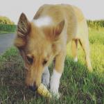 Wie wichtig ist die richtige Hundeernährung?