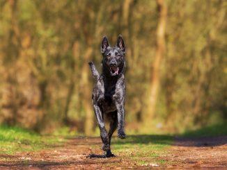 """Tipps zur """"Hundeabwehr"""" beim Joggen"""