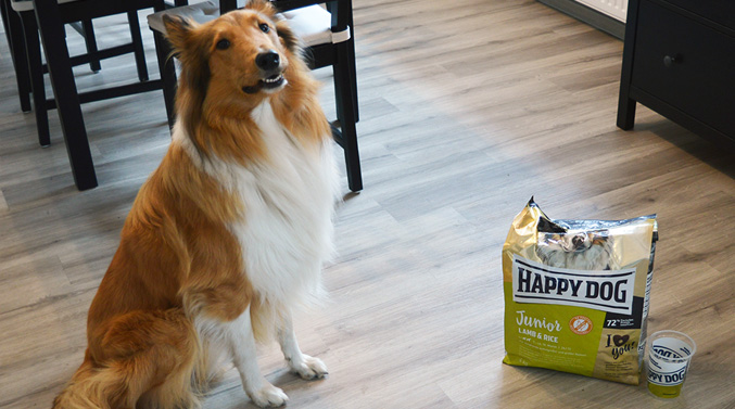 "Collie ""Lio"" testet das Happy Dog Supreme Young Hundefutter"
