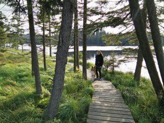 Wandern mit dem Hund im Sauerland
