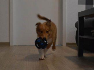 Hundehaftpflichtversicherung: Der wichtigste Schutz für Hund und Herrchen