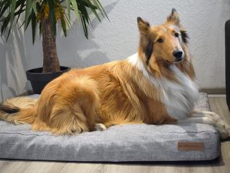 Für unseren Collie nur das Beste: Orthopädische Hundematte
