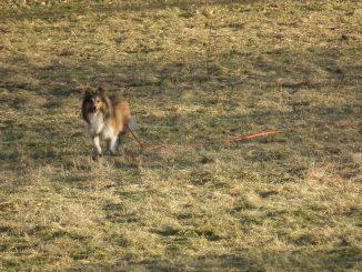 Die Vorteile einer Schleppleine für die Hundeerziehung