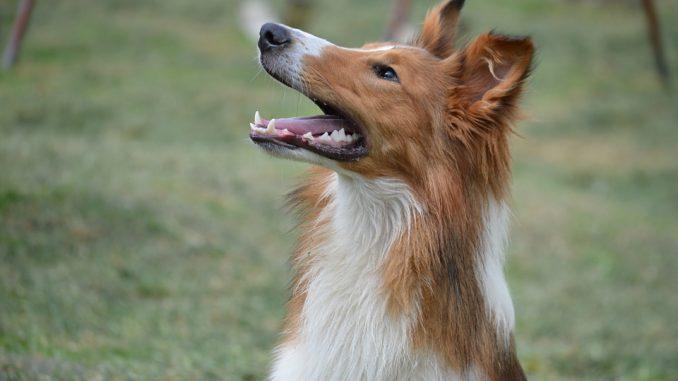 Welche Schäden werden durch die Hundehaftpflichtversicherung abgedeckt?