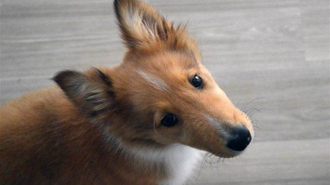 Fehlverhalten: Hund an das Aquarium gewöhnen