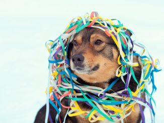 Hund zu Silvester