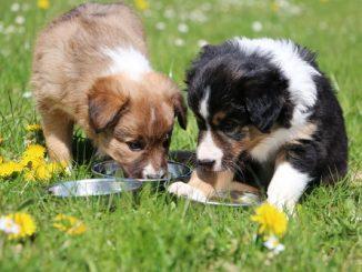 Hypoallergenes Hundefutter: Eine Wohltat für sensible Hunde