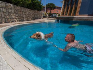 Collie schwimmt im Pool