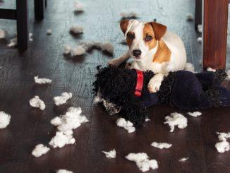 Hund im Chaos
