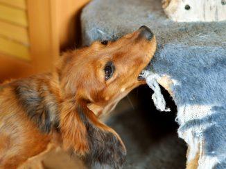 Hund zerstört Möbel