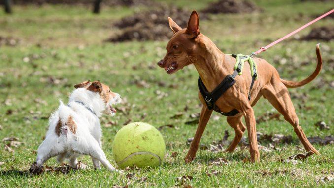 Ein Hund bellt einen anderen Hund an