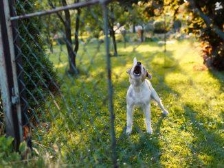 Hund steht im Garten vor dem Zaun