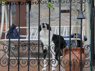Hund steht vor der Tür und es klingelt