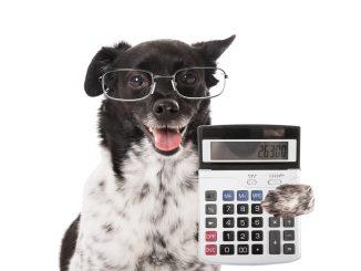 Hund mit Brille hält einen Taschenrechner in der Pfote