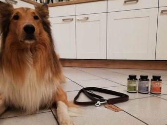 hund mit leine und nahrungsergänzungsmitteln