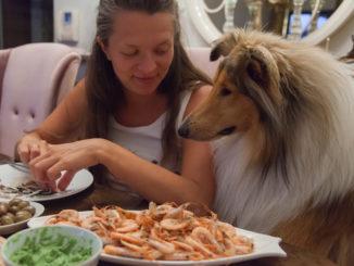 Ein Collie sitzt mit einem jungen Mädchen am Tisch und guckt auf das Essen