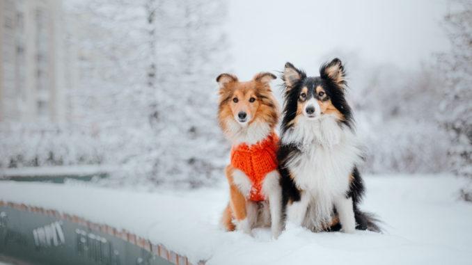 Zwei Hunde sitzen im Schnee. Ein Hund hat Hundebekleidung an.