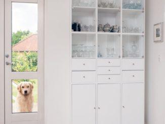 Ein Golden Retriever steht vor der Haustür