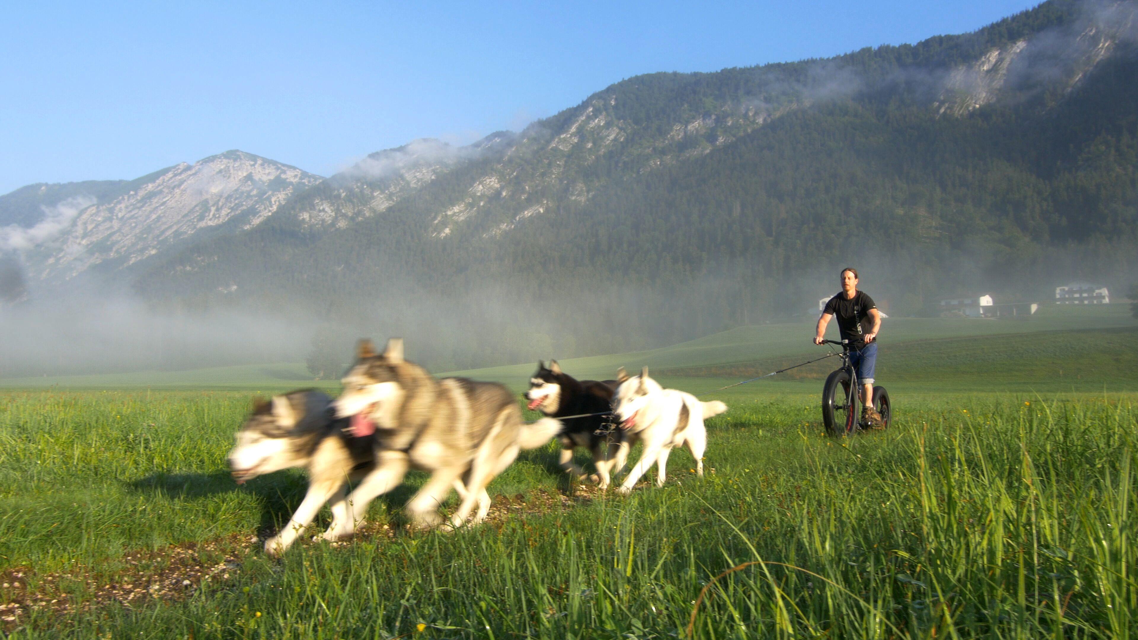 Dogscooting mit mehreren Hunden