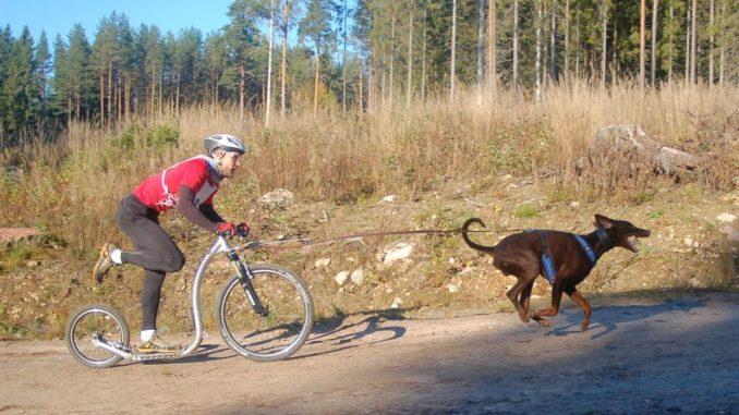 Ein Hundehalter auf einem Tretroller, vor dem ein brauner Hund gespannt ist.
