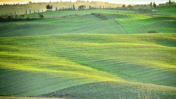 Grüne Wiesen in der Toskana