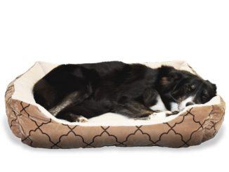 Schwarzer Hund liegt im Hundebett und schläft