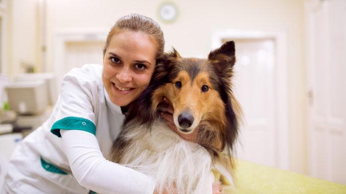 Eine Tierärztin hält einen Collie in den Armen