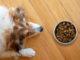 Ein Hund (Collie) liegt vor einem Fressnapf in dem sich Trockenfutter befindet